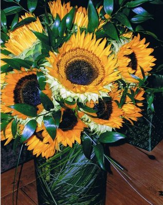 sunflowers at Frey Florist